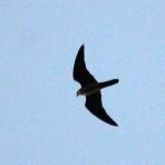 Falco-11-7-2014-IMG_0141