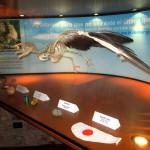 Eco-b-Museo-IMG_5714