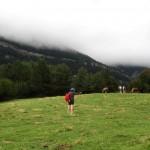 Pirineu-vaques-3-9-15--IMG_