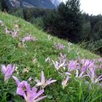 Pirineus-3-9-15-IMG_5502