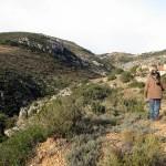 Buitre-serratella-31-12-15I