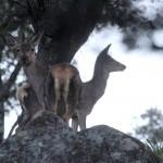 cervol-img_4758