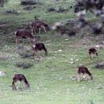cervols-img_4962