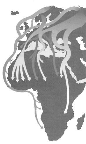 El cuco es una especie que ocupa amplias zonas de Eurasia y norte de Africa.