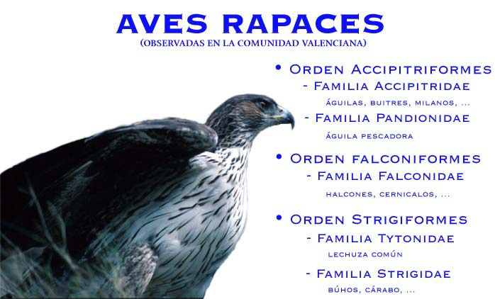 Image Result For Aves Grandes Con Picos
